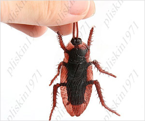 fake Cockroach magnet