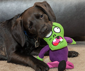 Zombie Chew Toy for Dog