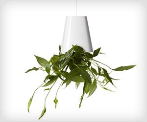 vertical plants hanging from ceiling