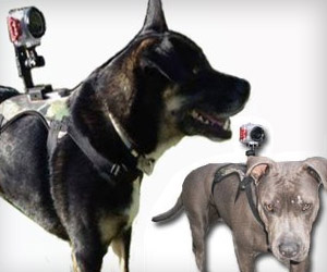 attach camera to dog's back with camera mount