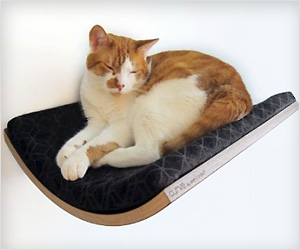 floating pet cat bed with wall mounting feature