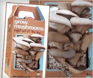 grow mushrooms in box at home
