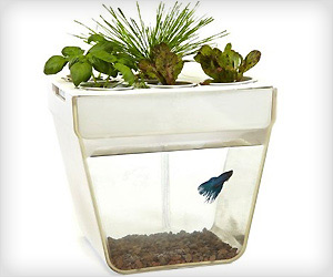 fish task that clean itself  by growing plants