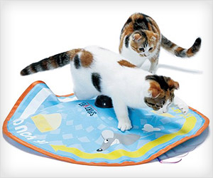 cat play toy with pouncing moving actions
