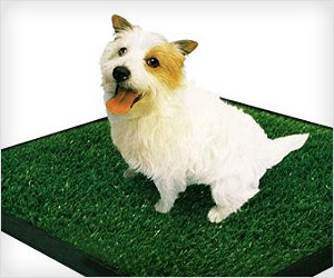 indoor pet potty trainer pad