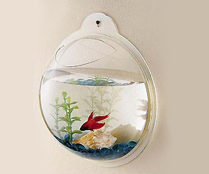 Wall mount decorative Fish Bowl
