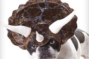 Dog dinosaur head gear costume