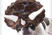 Dog dinosaur head gear costume
